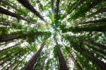 One Million Trees: Green America's Challenge to Universities